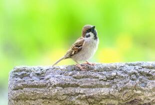 鳥から感染する病気があることを知っていますか?